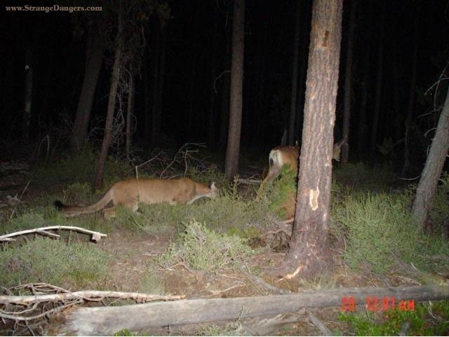 Funny pics thread, post what ever you got!-cougar-deer.jpg